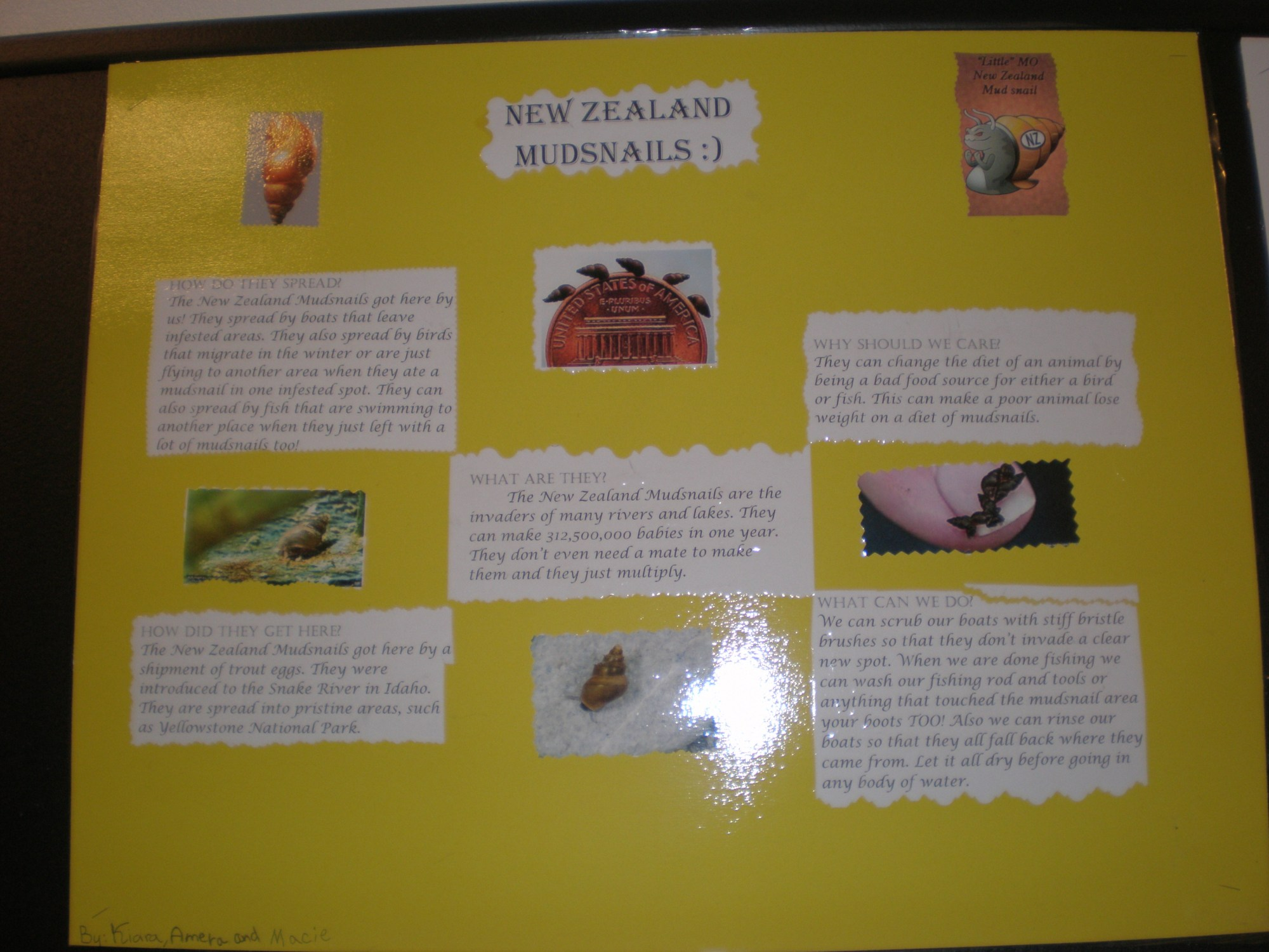 hight resolution of New Zealand MudSnail posters – Becky Siebold (4th grade)   Invasive Species  101