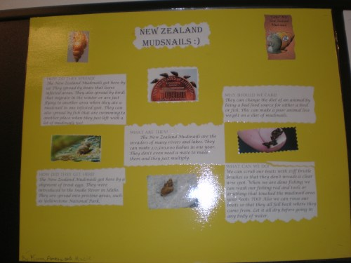 small resolution of New Zealand MudSnail posters – Becky Siebold (4th grade)   Invasive Species  101