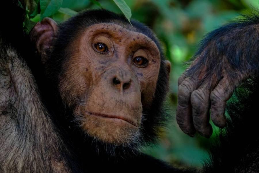 Jane Goodall – recenzia cărţii
