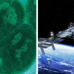Radiation-Resistant Bacteria Can Travel to Mars, Study Says
