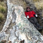 Petrified Trees Found in Peruvian Plateau Suggests Drastic Climate Changes
