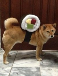 Down To The Wire Hair? 5 DIY Halloween Costumes For Your Dog