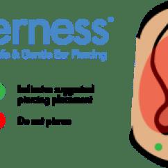 Different Ear Piercings Diagram Pollak Trailer Wiring Faqs Safepierce Tips For Newly Pierced Ears