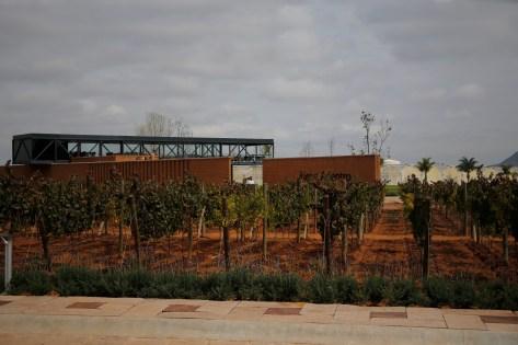 Vino_Zacatecas