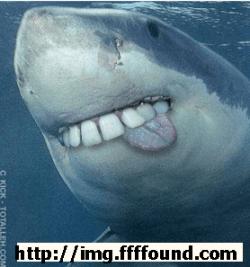 TIBURON-SEDA-250x267% - A los tiburones les gusta los gusanos de seda