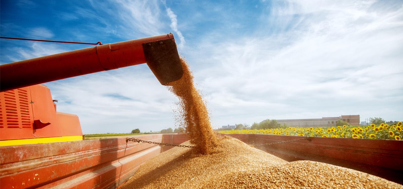 Grains: Still the portfolio diversifier of champions
