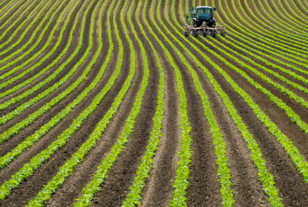 New fund manager Solum Partners—launched by former executives from Harvard Management Company, which manages the Ivy League school's $40 billion-plus endowment— will invest in global agriculture and food opportunities.