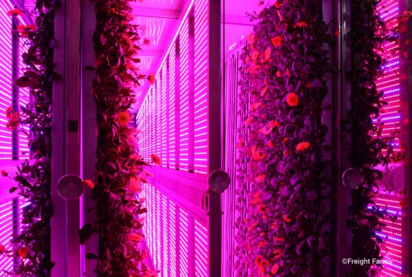 Vertical farming startup Freight Farms is partnering with clean energy utility disruptor Arcadia to provide renewable energy access to its farmers.