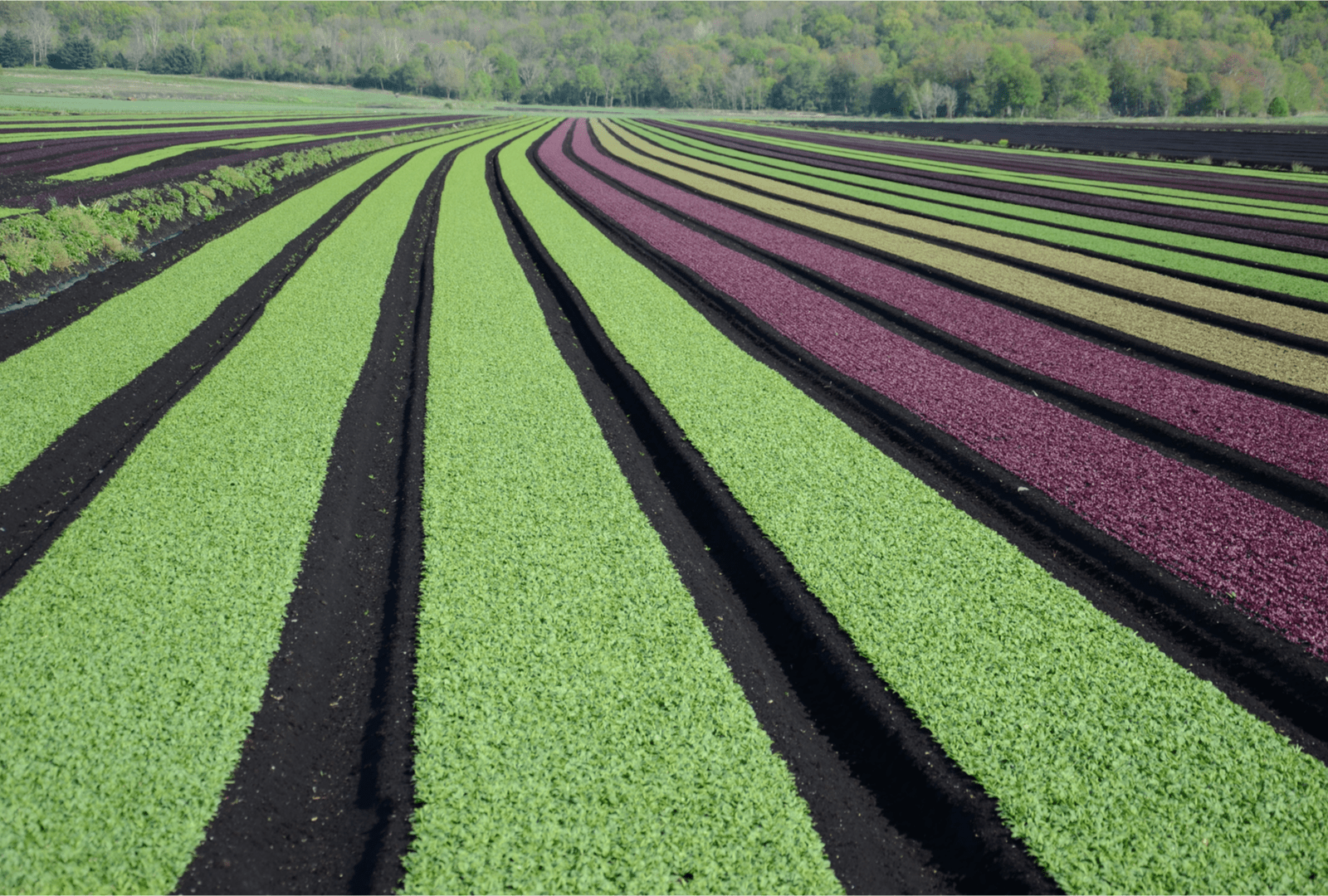 Agriculture venture capital had a $26 billion year