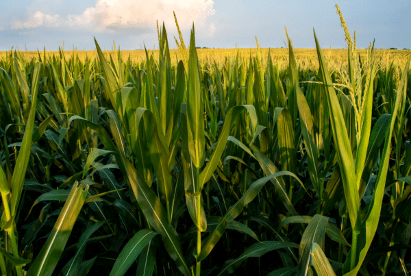 Open Prairie Rural Opportunities Fund, an $81 million private equity fund that invests in rural U.S companies, has its first successful exit.