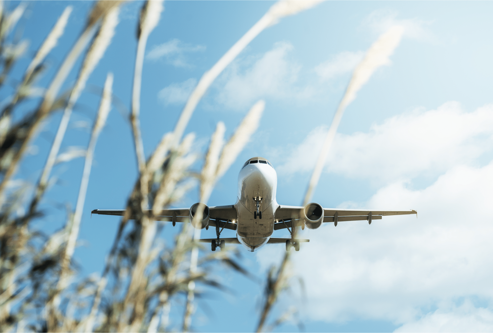 Sustainable Aviation Fuel in Canadian milestone