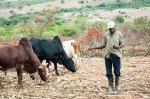 UN study: Digitization of Kenyan farmer payments helps tackle poverty