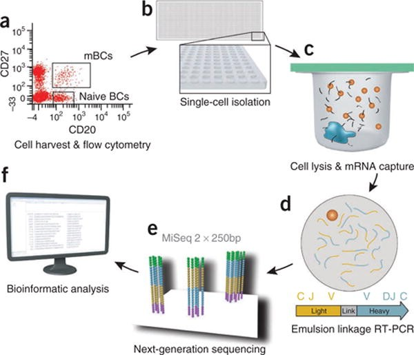 圖五、Single-cell transcriptomics。a. 先以流式細胞儀分離出有興趣的細胞次群;b. 置入125-pl體積的凹槽中;c. 萃取mRNA;d. e. 以次世代定序技術NGS定序;f. 送入data base分析(DeKosky et al. Nat Biotechnol. 2013 31(2):166-9.)