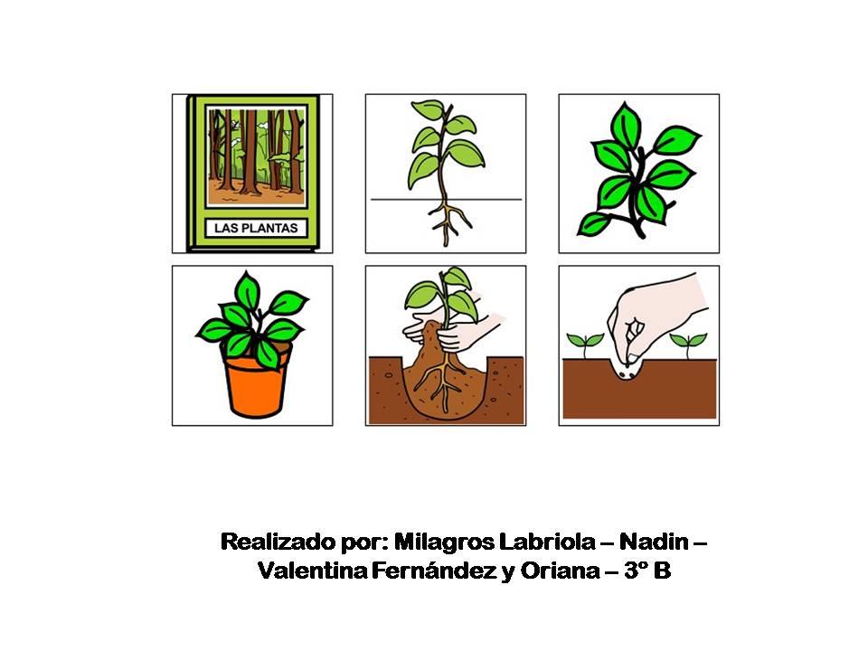 Noticias  Pictogramas y Folletos de Concientizacin de la Salud  Animales y Plantas  3 B