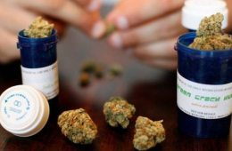 N.B. government invests $4M in medical marijuana production facility