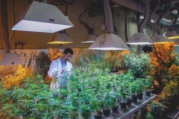 Universities Don't Want to Work With DEA on Weed Research – MERRY JANE