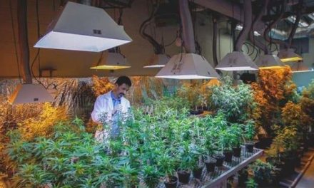 Two of Canada's big banks back away from marijuana industry … – CTV News