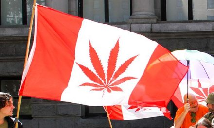 Canadian MMJ Company Offers Nation's First High-CBG Strain