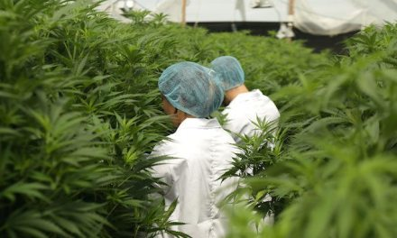 Supreme Pharmaceuticals Inc., International Cannabis Corp., Aurora Cannabis Inc., Canopy Growth Corp., Aphria Inc vying to become the biggest