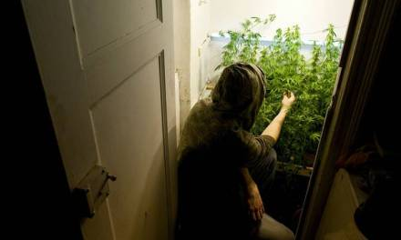 Smelly, fussy, humid: Why you may not want to grow your own legal pot – Globalnews.ca
