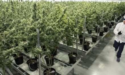 Edmonton Airport Will Soon Be Home To A Massive Medical Marijuana Grow-Op – Huffington Post Canada
