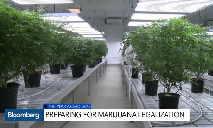 Canada Gears Up For Marijuana Legalization in 2017 – Bloomberg