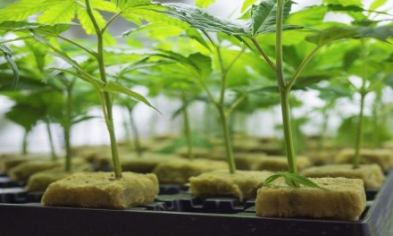 THC BioMed agrees US$1mln deal to buy cannabis packaging group