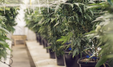 Top 3 Most Attractive Investment Subsets Of The Cannabis Industry – Civilized