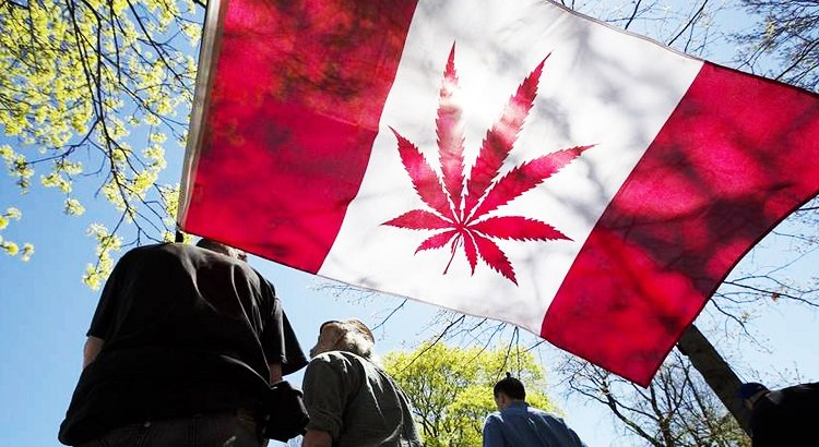 Competition Will Be Good for Canadian Cannabis Consumers – Weed News (blog)