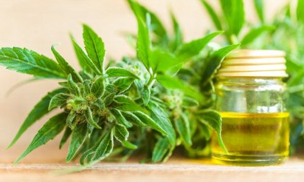 Cannabis oil use in the UK doubles in a YEAR: Figures reveal 250000 people now rely on the controversial potion to …