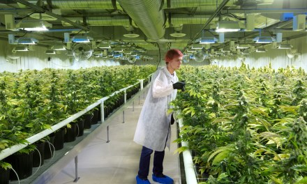 OSC orders Aurora to provide more disclosure, blocks CanniMed poison pill in marijuana takeover battle