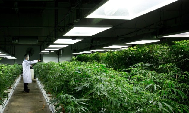 Growing weed is not so great for the environment — what Canada can do to make it greener