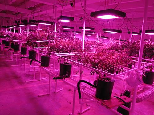 Grow room at District Growers.