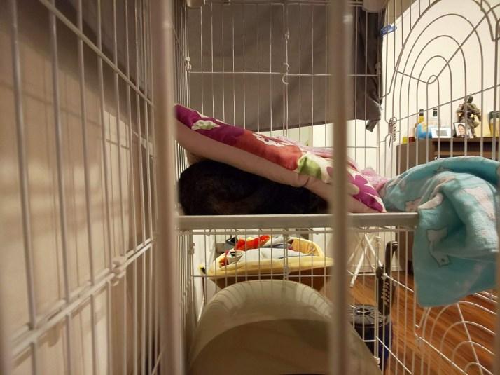 クッションの下に隠れる猫