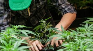 Wait for the Next Big Correction to Jump on Canopy Growth Stock