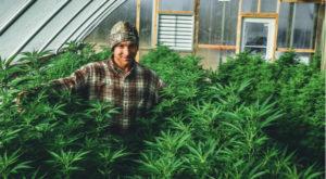 Marijuana stocks