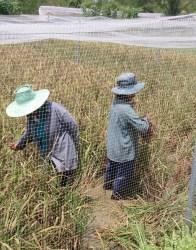 Thai model farm_Arno Maierbrugger