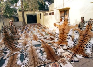 The multi-million dollar industry that deals in endangered animals' deaths