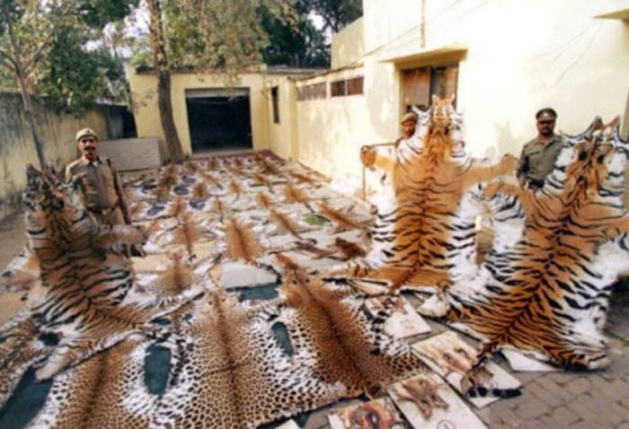 Animal trade