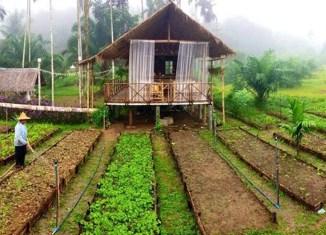 Thailand boosts organic farming