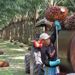 Malaysia PM: EU risking trade war over palm oil ban