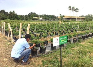 "Brunei's ""agripreneurs"" Boost Agricultural Output By 13%"