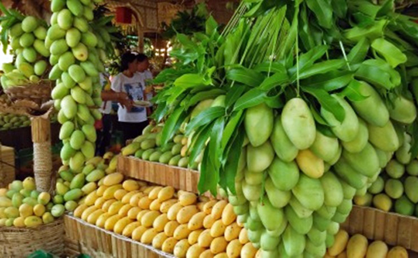 Dry Weather Causes Mango Overflow In The Philippines