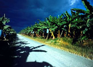 Banana Plantation Mindanao
