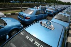 Blue Bird1