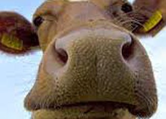 Lion Air crashes into cow on Sulawesi runway