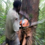 Illegal logging costs Indonesia $7b