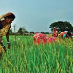 India beats Thailand as top rice exporter