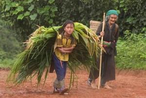 Laos farmers