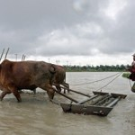 Myanmar agro companies look abroad